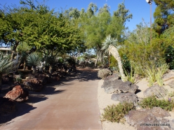 1 Las Vegasas. Ethel M kaktusų parkas (11)