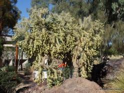 1 Las Vegasas. Ethel M kaktusų parkas (12)