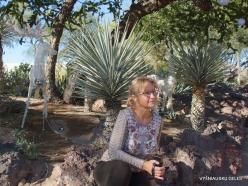 1 Las Vegasas. Ethel M kaktusų parkas (2)