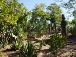 1 Las Vegasas. Ethel M kaktusų parkas (5)