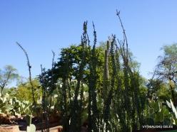 1 Las Vegasas. Ethel M kaktusų parkas (6)