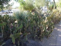 1 Las Vegasas. Ethel M kaktusų parkas (7)
