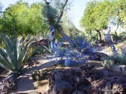 1 Las Vegasas. Ethel M kaktusų parkas (9)