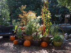 Los Andželas. Descanso botanikos sodas (3)