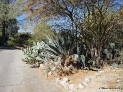 Los Andželas. Descanso botanikos sodas (5)