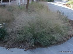Los Andželas. Descanso botanikos sodas (6)