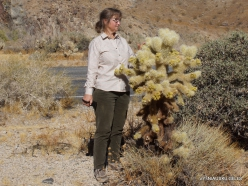 Siauralapių jukų nacionalinis parkas. Kolorado dykuma (1)