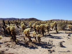 Siauralapių jukų nacionalinis parkas. Kolorado dykuma (10)