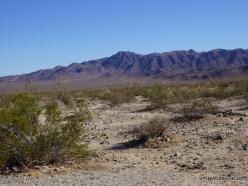 Siauralapių jukų nacionalinis parkas. Kolorado dykuma (11)