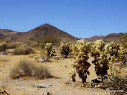 Siauralapių jukų nacionalinis parkas. Kolorado dykuma (12)