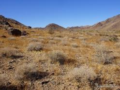 Siauralapių jukų nacionalinis parkas. Kolorado dykuma (2)