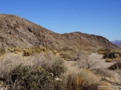 Siauralapių jukų nacionalinis parkas. Kolorado dykuma (3)