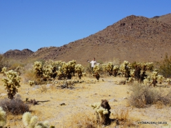 Siauralapių jukų nacionalinis parkas. Kolorado dykuma (4)