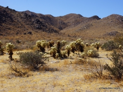 Siauralapių jukų nacionalinis parkas. Kolorado dykuma (5)