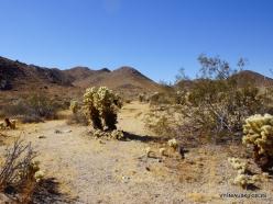 Siauralapių jukų nacionalinis parkas. Kolorado dykuma (6)