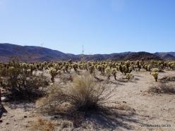 Siauralapių jukų nacionalinis parkas. Kolorado dykuma (7)