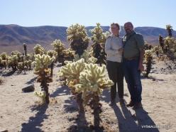 Siauralapių jukų nacionalinis parkas. Kolorado dykuma (8)
