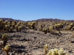 Siauralapių jukų nacionalinis parkas. Kolorado dykuma (9)