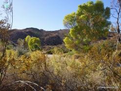 Siauralapių jukų nacionalinis parkas. Lost Palms oazė (4)