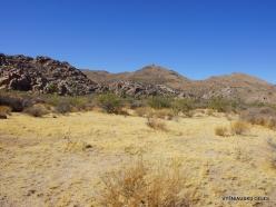 Siauralapių jukų nacionalinis parkas. Mohavių dykuma (11)
