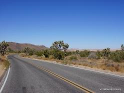 Siauralapių jukų nacionalinis parkas. Mohavių dykuma (13)