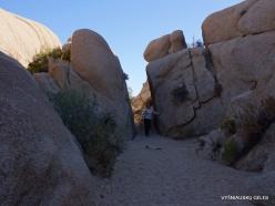 Siauralapių jukų nacionalinis parkas. Mohavių dykuma (43)