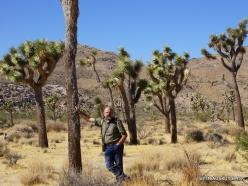 Siauralapių jukų nacionalinis parkas. Mohavių dykuma. Trumpalapė juka (Yucca brevifolia) (11)