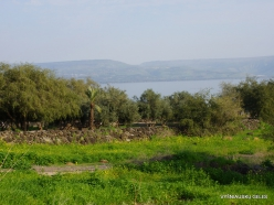 Capernaum. Sea of Galilee (Lake Tiberias, Kinneret) (8)
