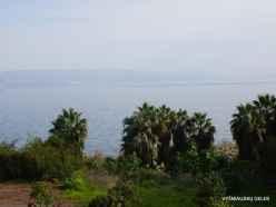 Tabha. Sea of Galilee (Lake Tiberias, Kinneret) (5)