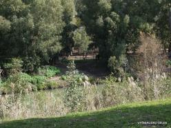 Yardenit. Jordan River (4)