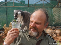 Neapoli. Amazonas Park. Ring-tailed lemur (Lemur catta) (7)