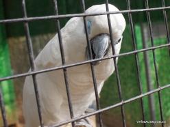 Neapoli. Amazonas Park. White cockatoo