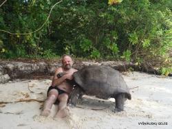 Seišeliai.-CurieSeišeliai. Curieuse. Aldabros dramblinis vėžlys (Aldabrachelys gigantea)use.-Aldabros-dramblinis-vėžlys-Aldabrachelys-gigantea-6