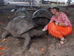 Seišeliai. Curieuse. Aldabros dramblinis vėžlys (Aldabrachelys gigantea)