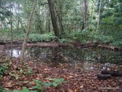 Seychelles. La Digue. Veuve Reserve (2)