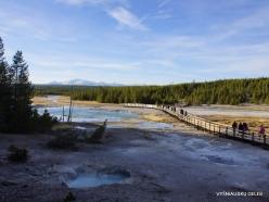 Jeloustono nacionalinis parkas. Norris Geyser Basin (5)