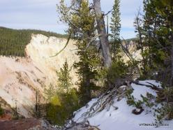 Jeloustono nacionalinis parkas. The Grand Canyon of the Yellowstone (20)