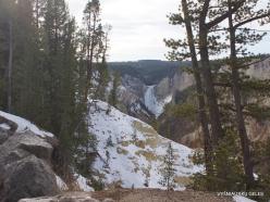 Jeloustono nacionalinis parkas. The Grand Canyon of the Yellowstone. Jeloustouno krioklys
