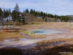 Jeloustono nacionalinis parkas. Upper Geyser Basin (19)