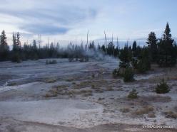 Jeloustono nacionalinis parkas. Yellowstone Lake area (14)