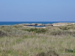 Habonim Beach Nature Reserve. Sharon Plain vegetation (batha) (5)