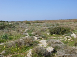 Hof Dor. Sharon Plain vegetation (batha) (4)