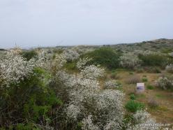 Near Netanya. Iris reserve (1)