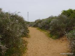 Near Netanya. Iris reserve (13)
