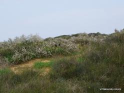 Near Netanya. Iris reserve (19)