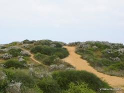 Near Netanya. Iris reserve (25)