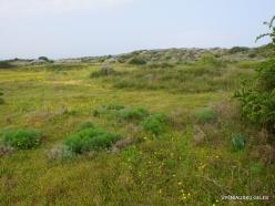 Near Netanya. Iris reserve (27)