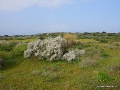 Near Netanya. Iris reserve (28)