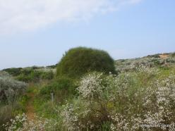Near Netanya. Iris reserve (30)