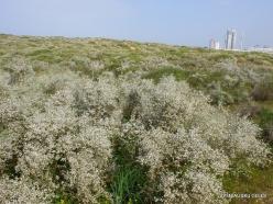 Near Netanya. Iris reserve (35)
